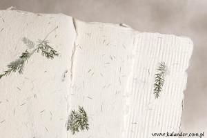 papier czerpany asparagus